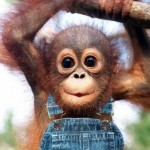 15 WAYS TO TAME YOUR MONKEYS…SOME IDEAS YOU CAN TRY ANYWAY!