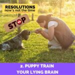 Puppy Train Your Lying Brain